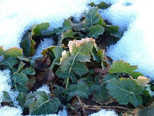 Hochbeet Im Winter Diese Dinge Sollten Sie Beachten Sager Garteng
